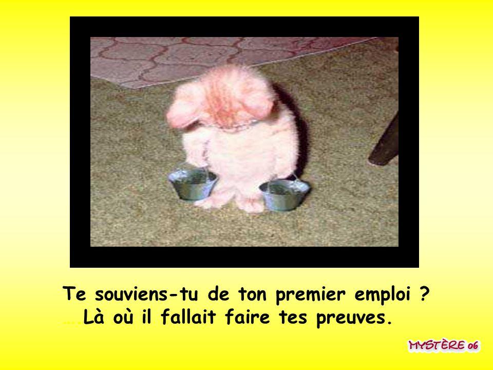 Te souviens-tu de ton premier emploi. …