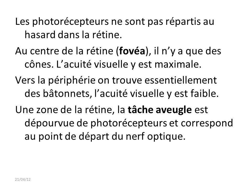 Les photorécepteurs ne sont pas répartis au hasard dans la rétine.