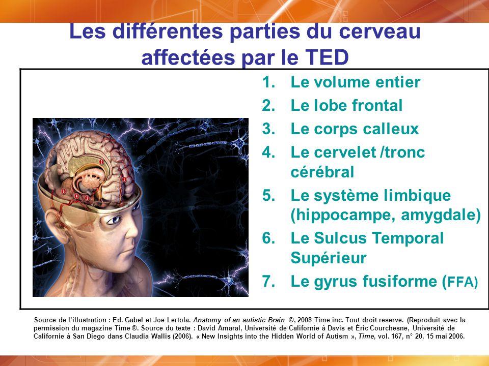 Les différentes parties du cerveau affectées par le TED