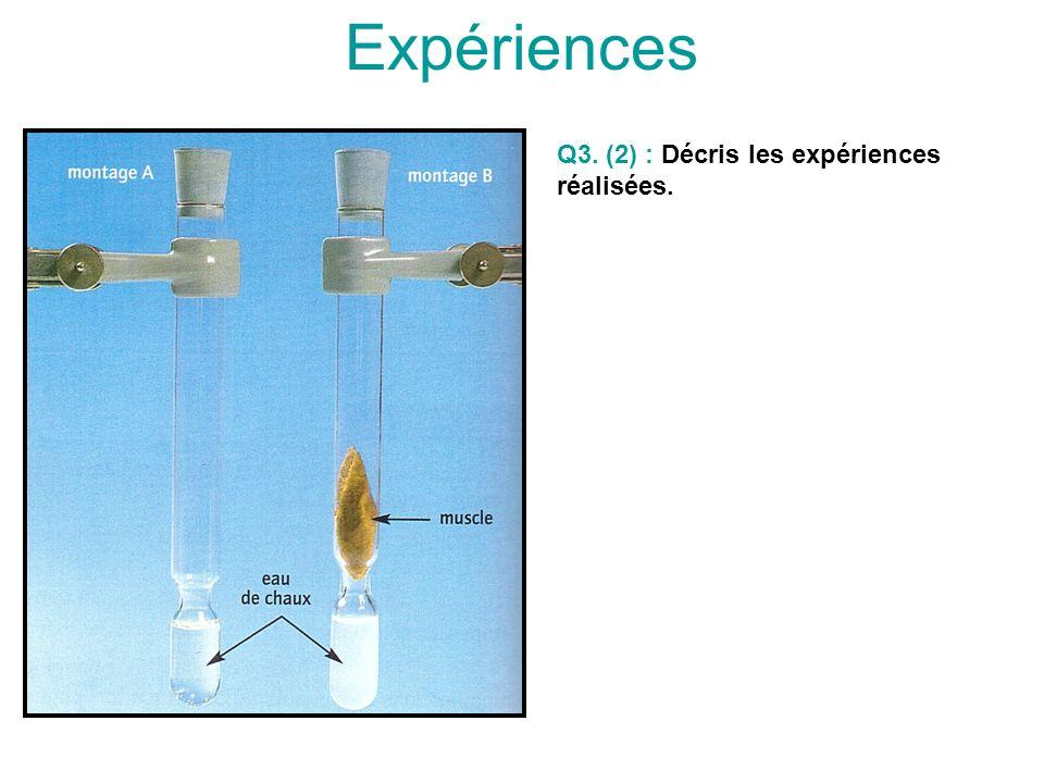 Expériences Q3. (2) : Décris les expériences réalisées.