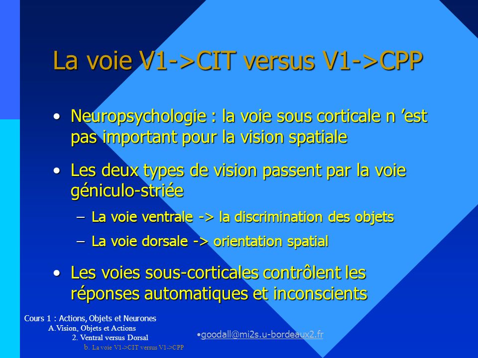 La voie V1->CIT versus V1->CPP