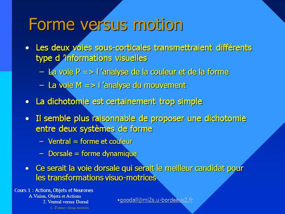 Forme versus motion Les deux voies sous-corticales transmettraient différents type d 'informations visuelles.