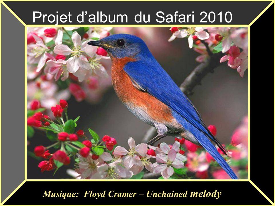 Projet d'album du Safari 2010