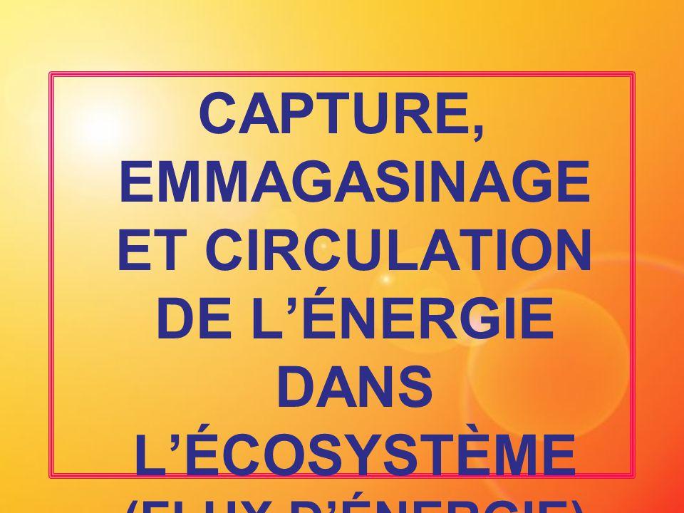 CAPTURE, EMMAGASINAGE ET CIRCULATION DE L'ÉNERGIE DANS L'ÉCOSYSTÈME (FLUX D'ÉNERGIE)