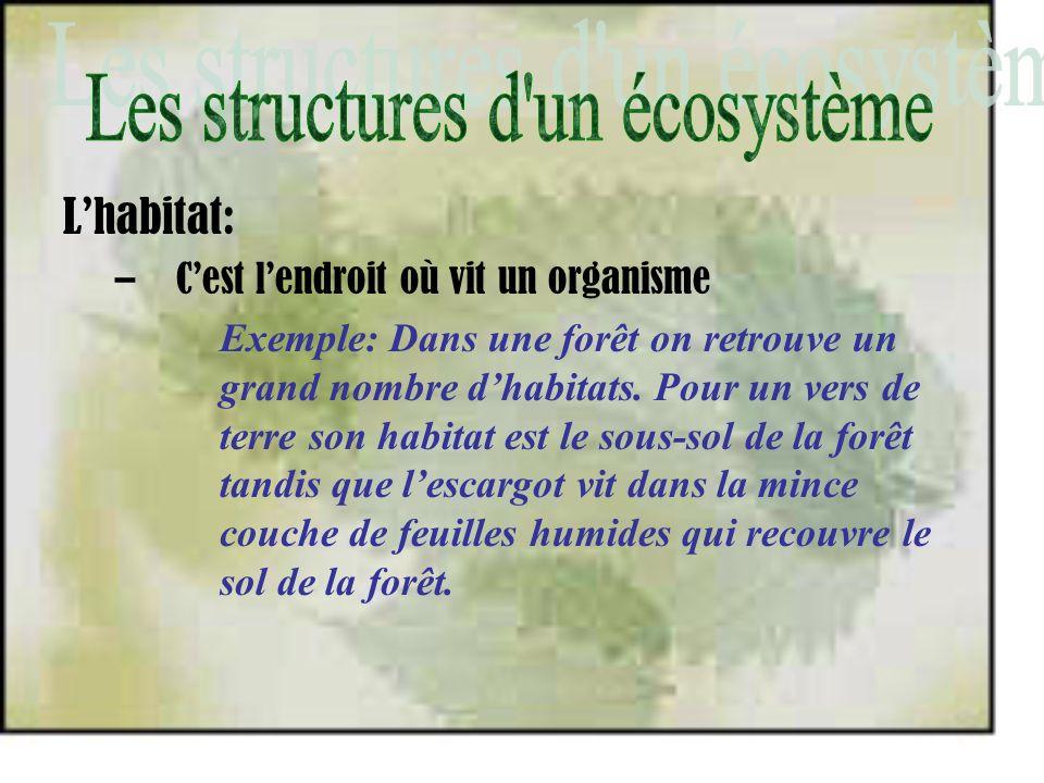 Les structures d un écosystème