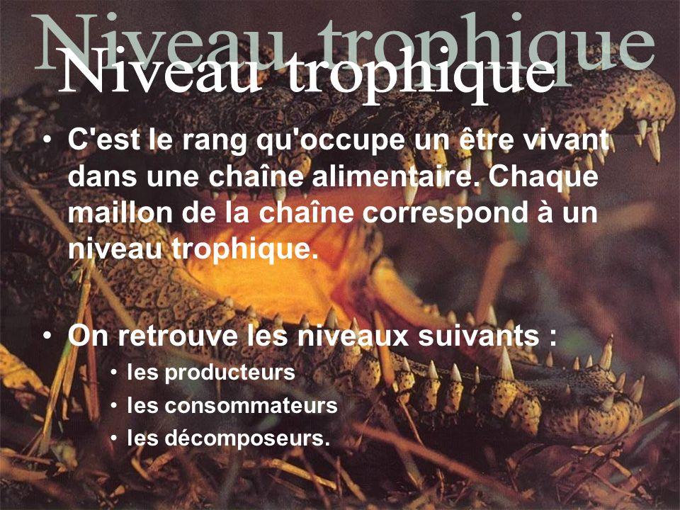 Niveau trophique C est le rang qu occupe un être vivant dans une chaîne alimentaire. Chaque maillon de la chaîne correspond à un niveau trophique.