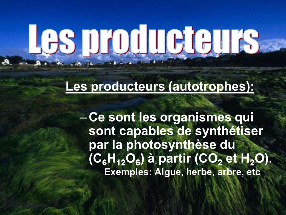 Les producteurs Les producteurs (autotrophes):