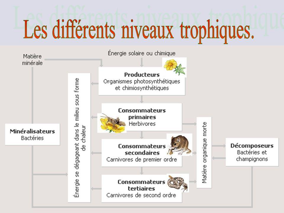 Les différents niveaux trophiques.