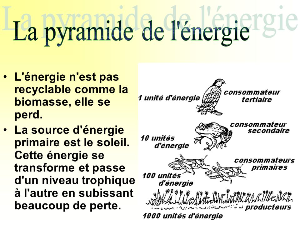 La pyramide de l énergie