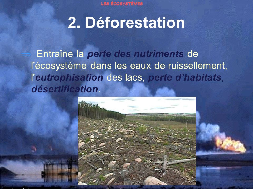LES ÉCOSYSTÈMES 2. Déforestation.
