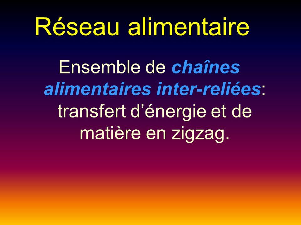 Réseau alimentaire Ensemble de chaînes alimentaires inter-reliées: transfert d'énergie et de matière en zigzag.