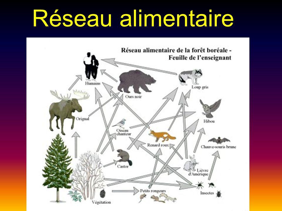 Préférence La durabilité des écosystèmes. - ppt video online télécharger VU93