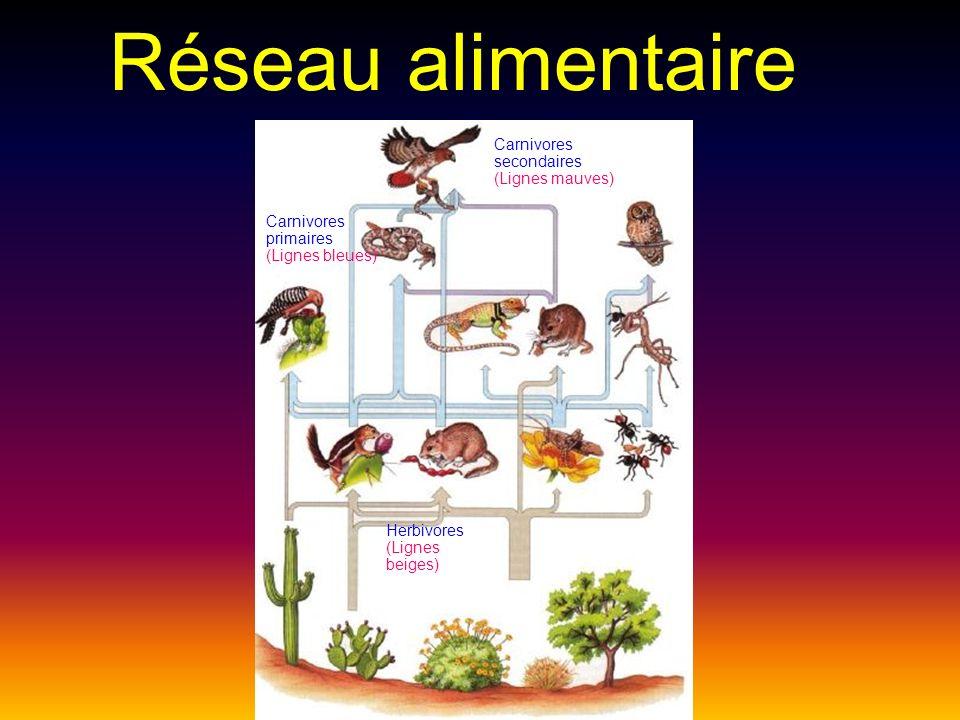 Réseau alimentaire Carnivores secondaires (Lignes mauves)