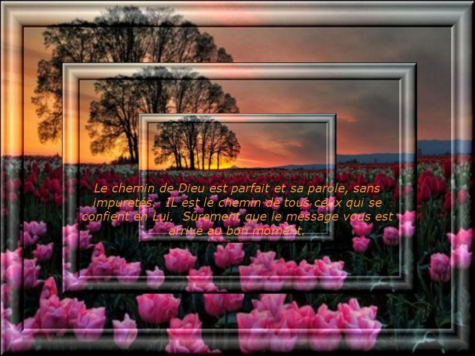 Le chemin de Dieu est parfait et sa parole, sans impuretés