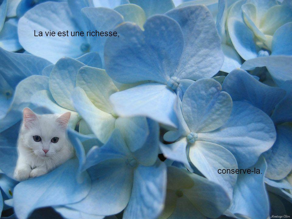 La vie est une richesse, conserve-la.