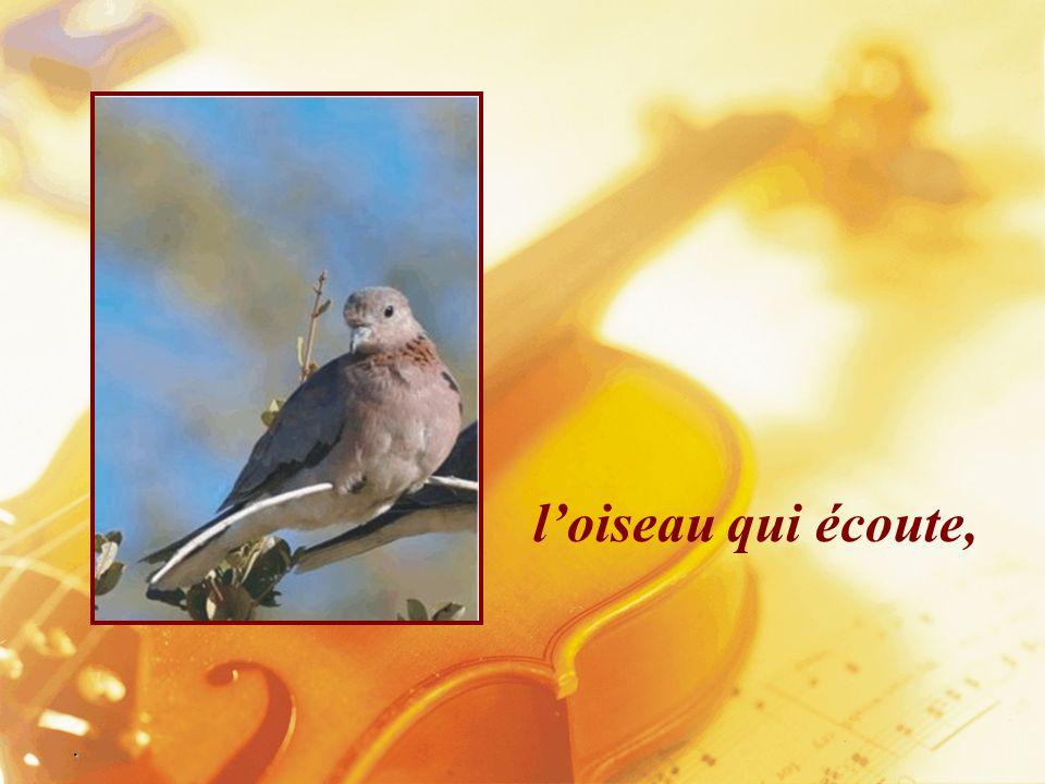 l'oiseau qui écoute, .