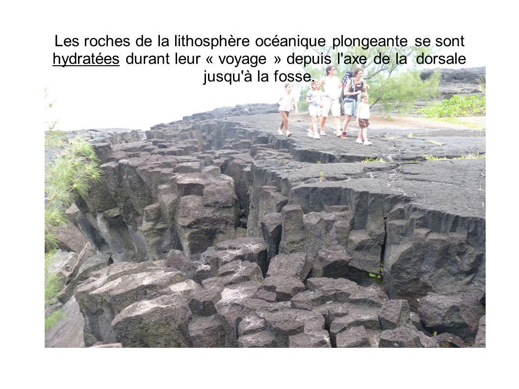 Les roches de la lithosphère océanique plongeante se sont hydratées durant leur « voyage » depuis l axe de la dorsale jusqu à la fosse.