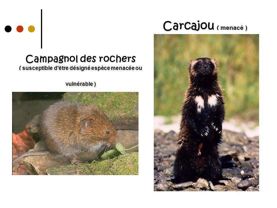 Carcajou ( menacé ) Campagnol des rochers ( susceptible d être désigné espèce menacée ou vulnérable )