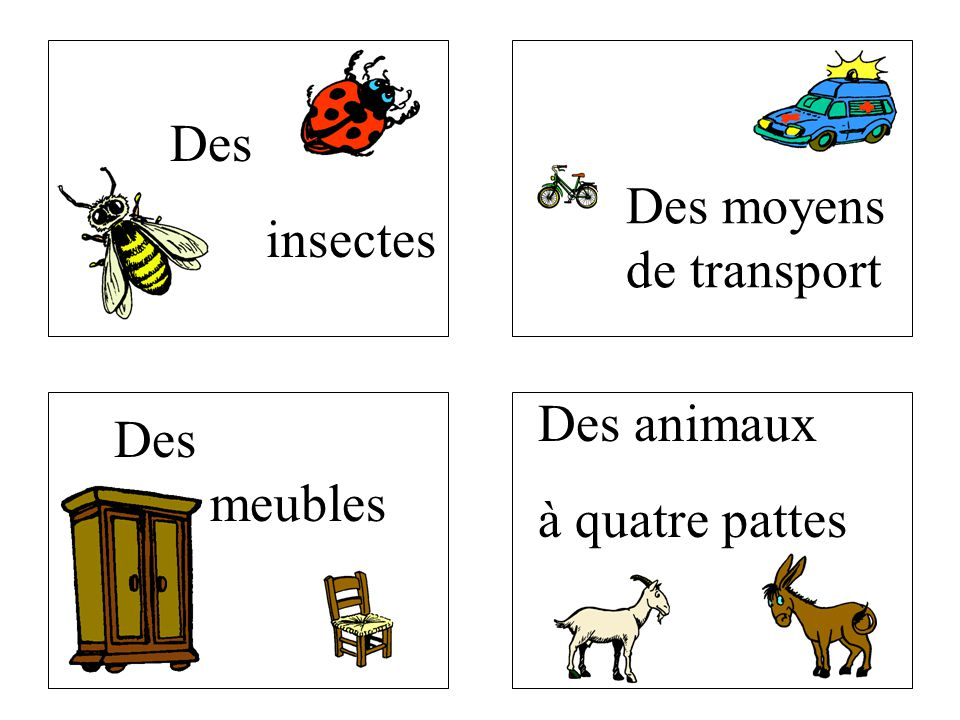 Des insectes Des moyens de transport Des animaux à quatre pattes Des meubles