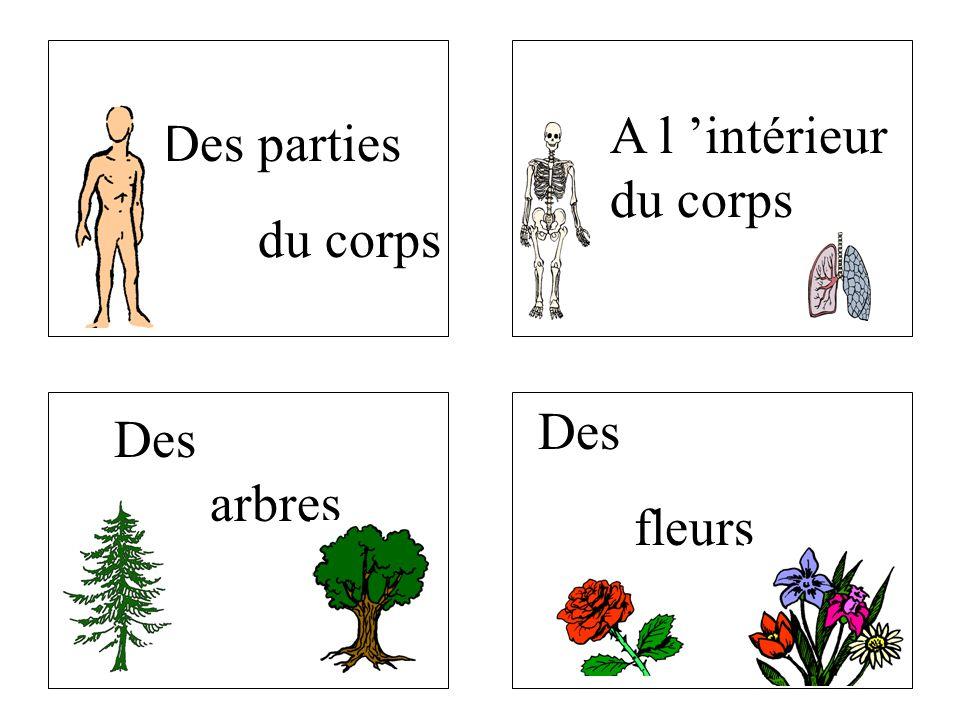 A l 'intérieur du corps Des parties du corps Des fleurs Des arbres