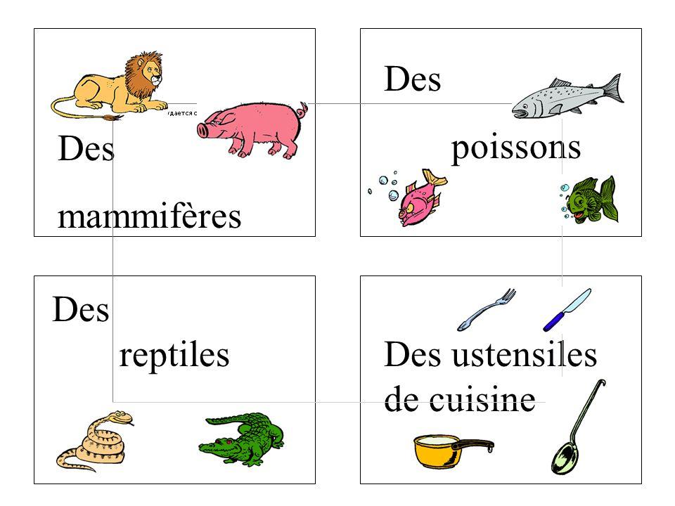 Des poissons Des mammifères Des reptiles Des ustensiles de cuisine