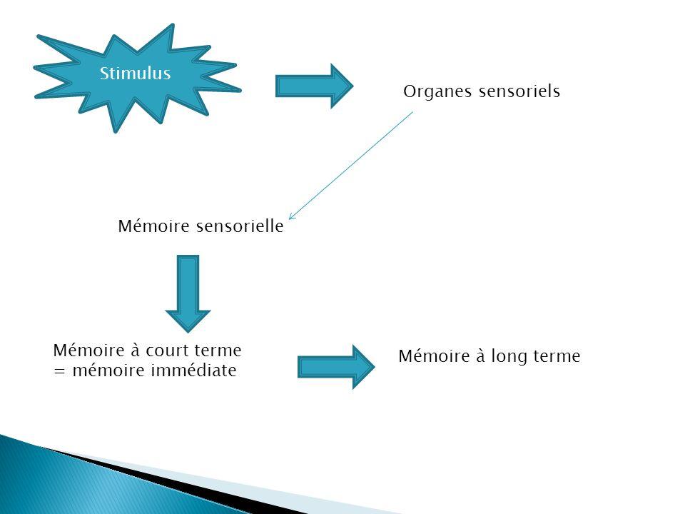 Stimulus Organes sensoriels. Mémoire sensorielle.