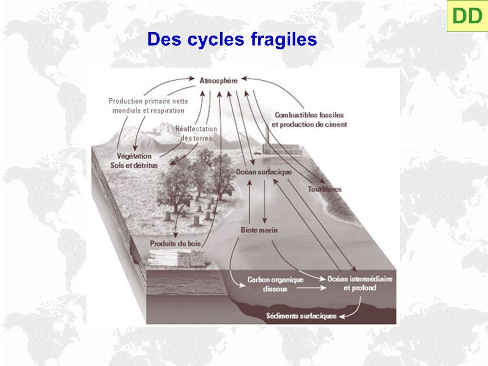 DD Des cycles fragiles