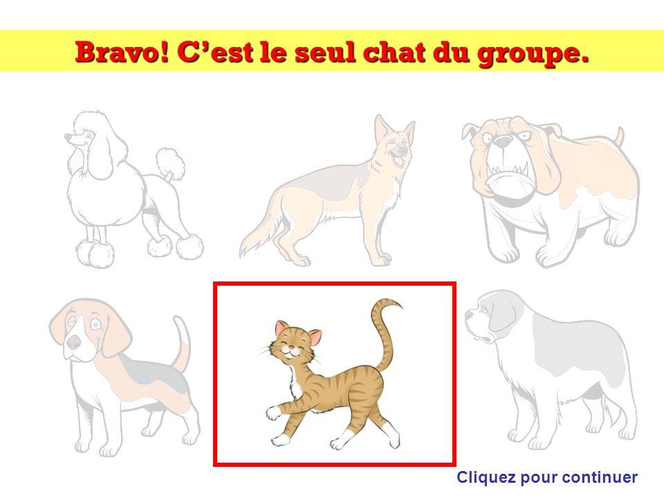 Bravo! C'est le seul chat du groupe. Cliquez pour continuer