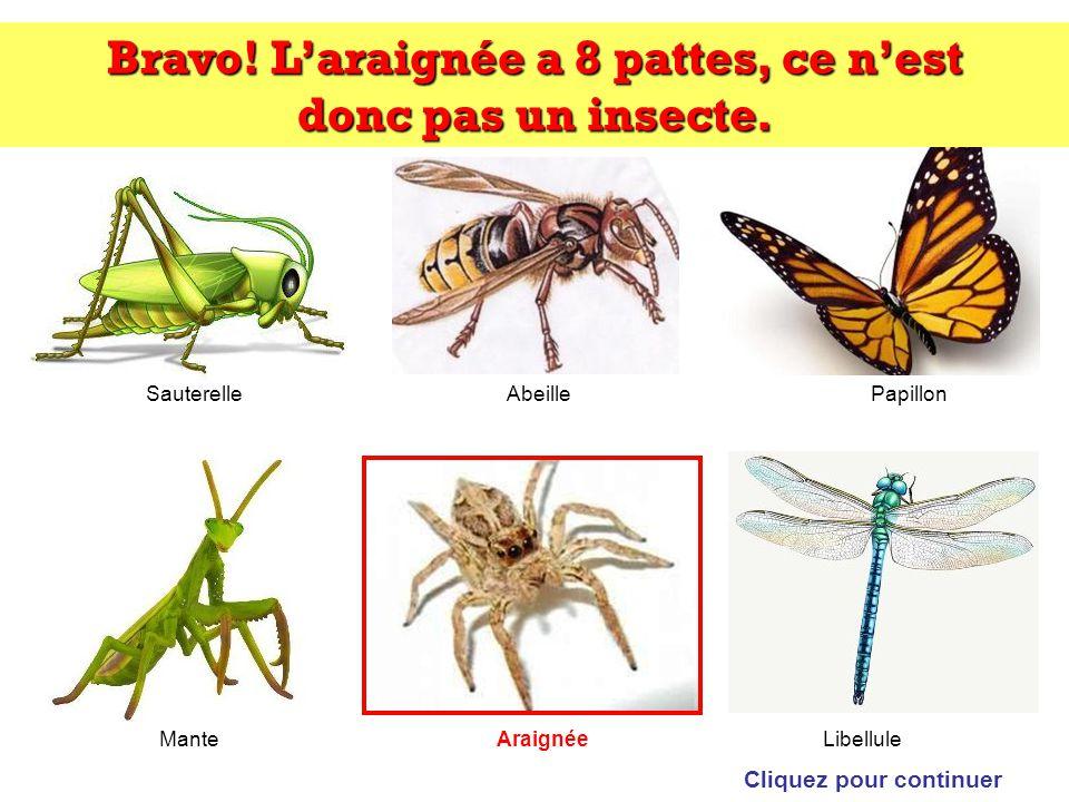 Bravo! L'araignée a 8 pattes, ce n'est donc pas un insecte.
