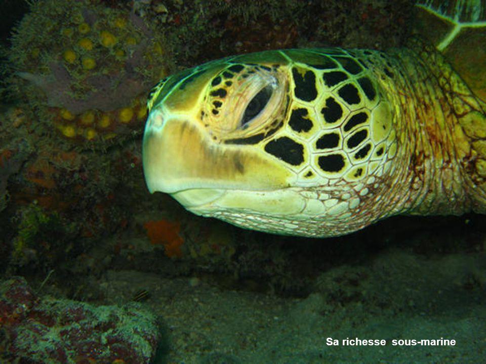 Sa richesse sous-marine