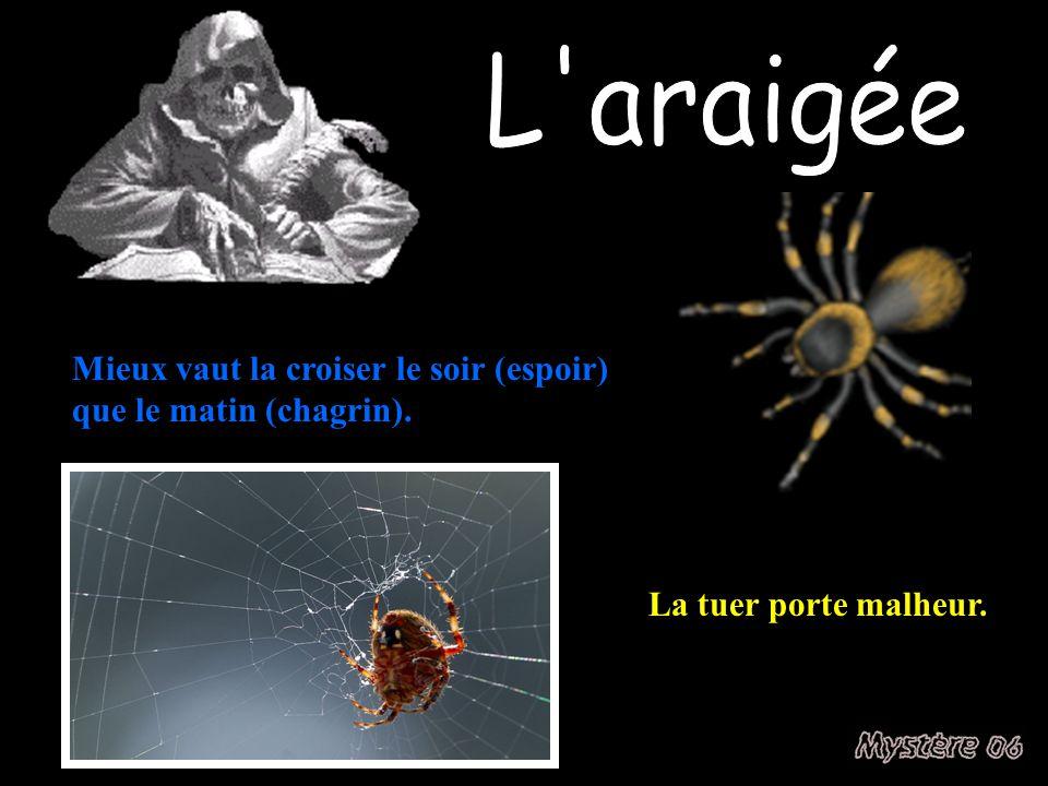 L araigée Mieux vaut la croiser le soir (espoir) que le matin (chagrin). La tuer porte malheur.