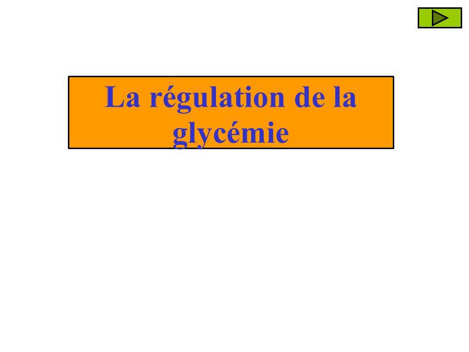 La régulation de la glycémie
