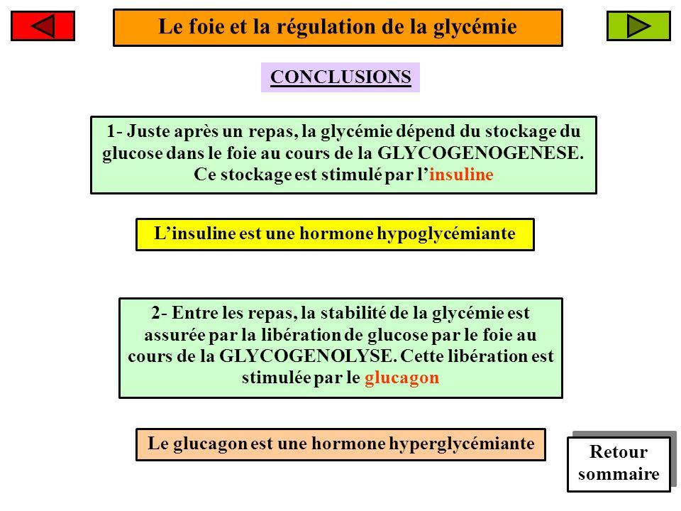 Le foie et la régulation de la glycémie
