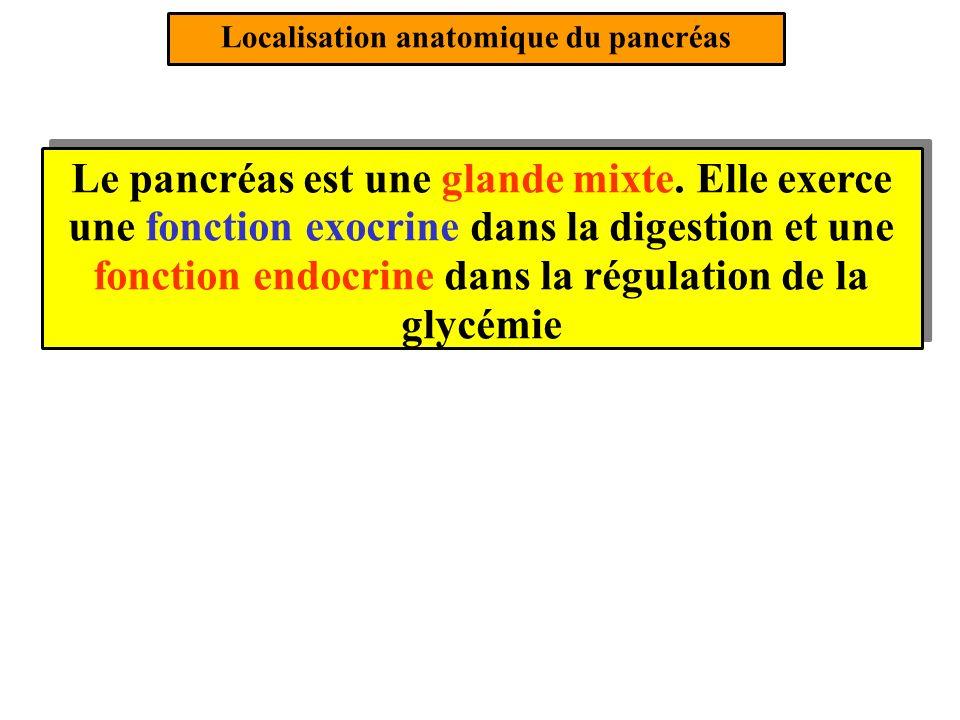 Localisation anatomique du pancréas