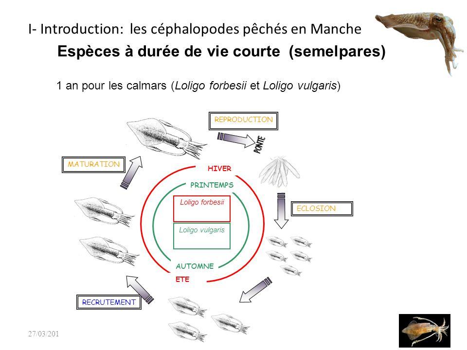 I- Introduction: les céphalopodes pêchés en Manche