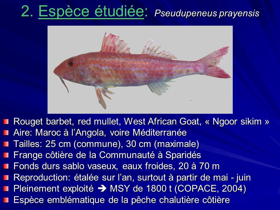 2. Espèce étudiée: Pseudupeneus prayensis