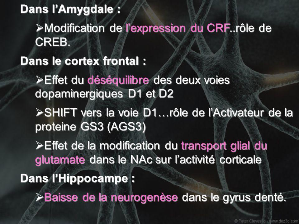 Dans l'Amygdale :Modification de l'expression du CRF..rôle de CREB. Dans le cortex frontal :