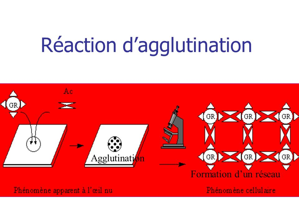 Réaction d'agglutination