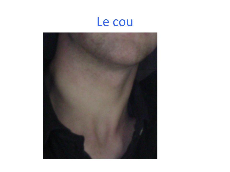 Le cou