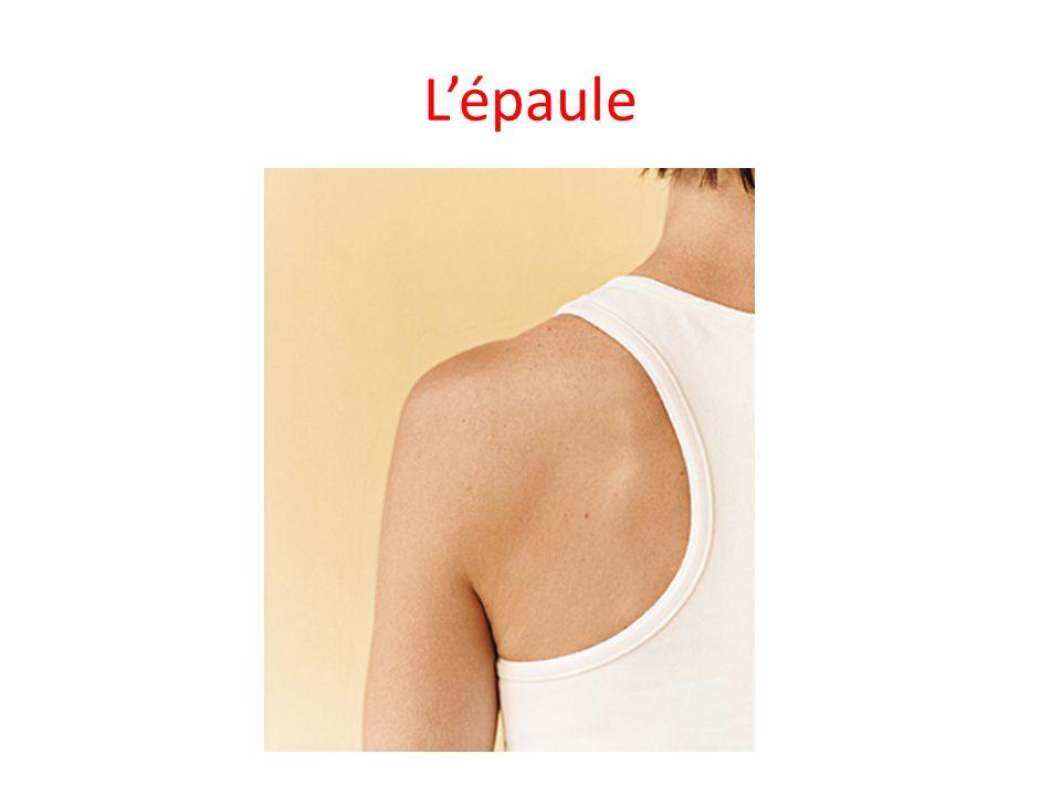 L'épaule