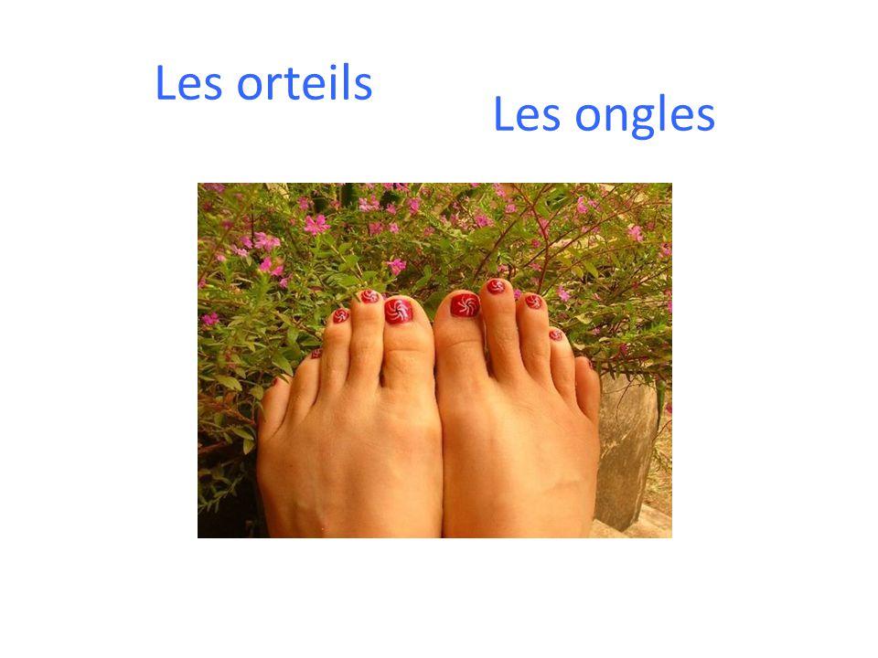 Les orteils Les ongles