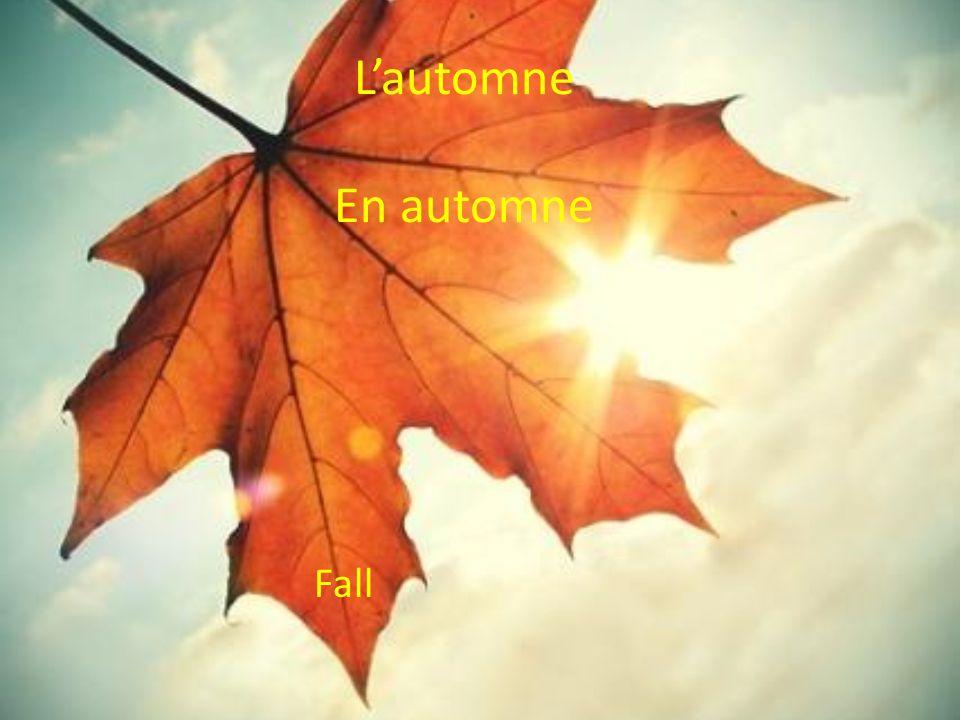 L'automne En automne Fall
