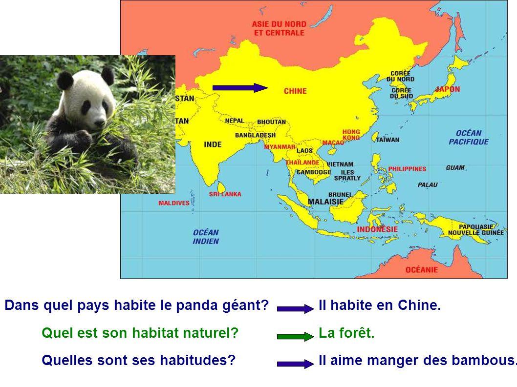 Dans quel pays habite le panda géant