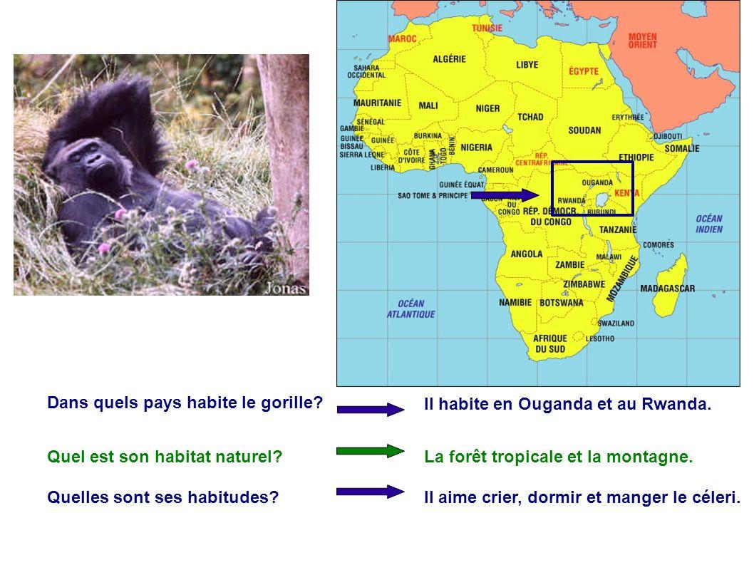 Dans quels pays habite le gorille