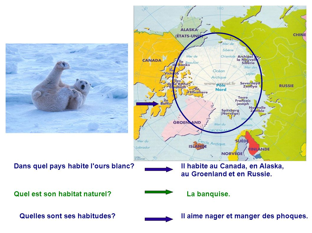 Dans quel pays habite l ours blanc