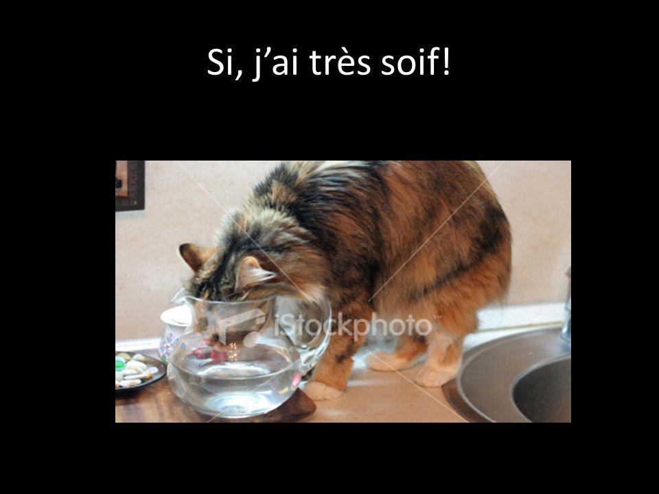 Si, j'ai très soif!