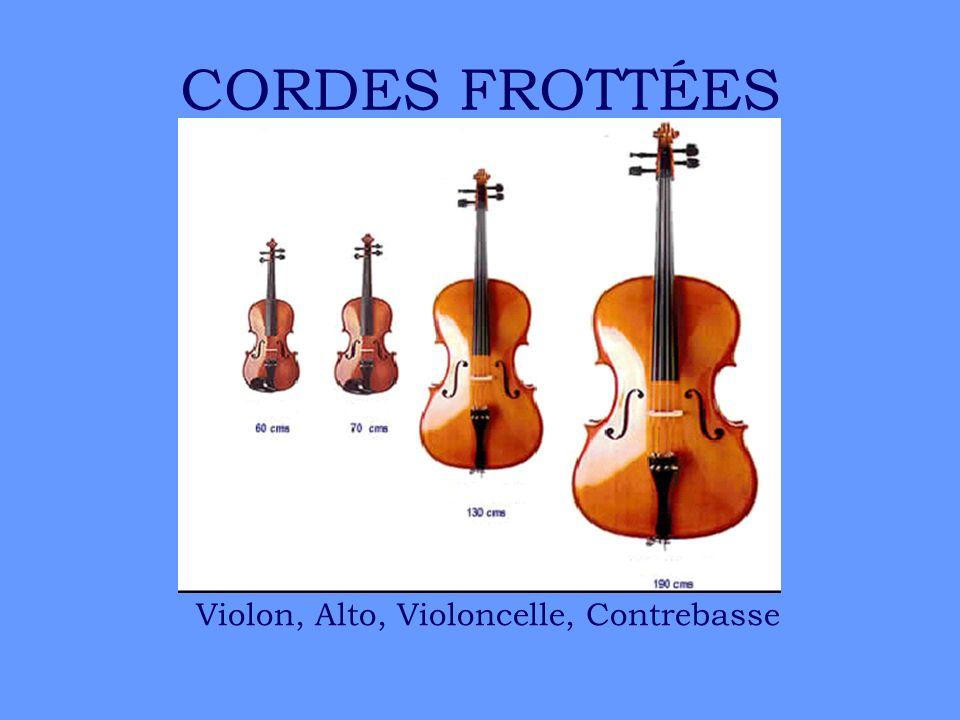 CORDES FROTTÉES Violon, Alto, Violoncelle, Contrebasse