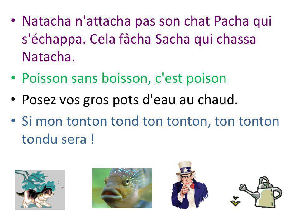 Natacha n attacha pas son chat Pacha qui s échappa