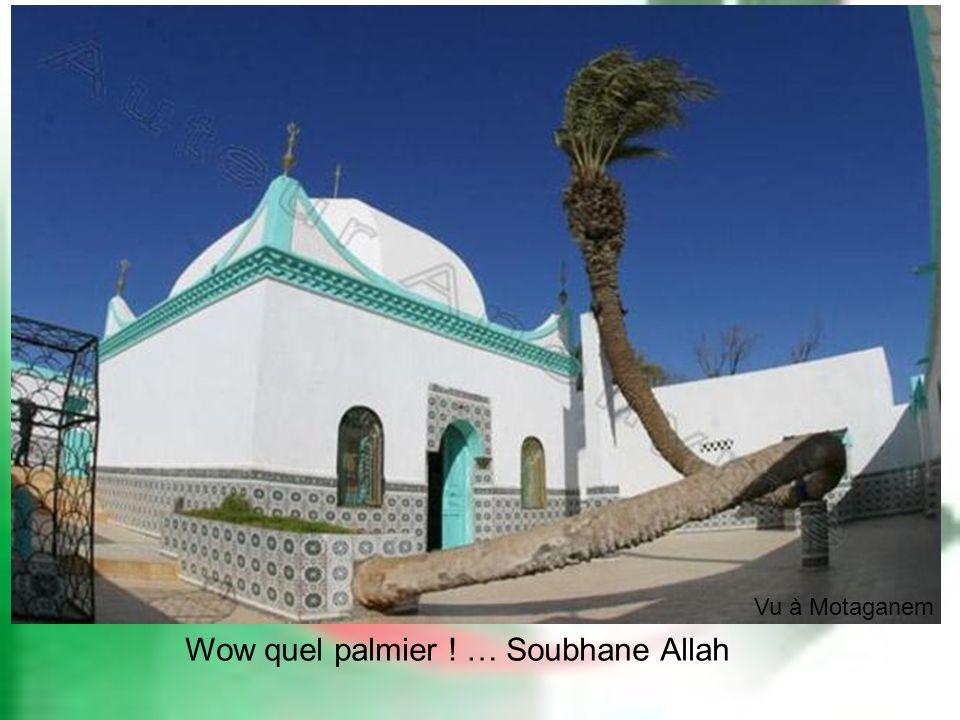 Wow quel palmier ! … Soubhane Allah