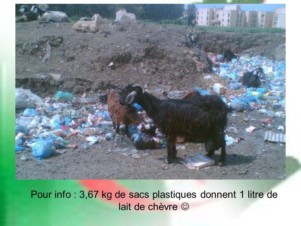 Pour info : 3,67 kg de sacs plastiques donnent 1 litre de lait de chèvre 